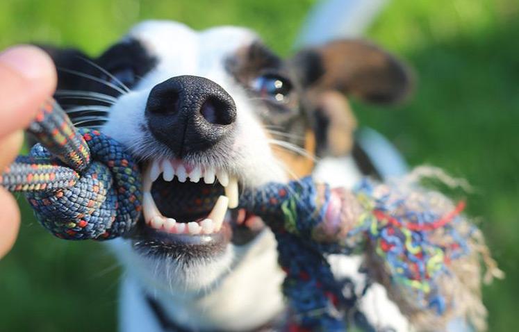 Seminar - Bissiger Hund!? Was nun???