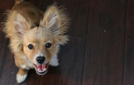 Seminar - Wer ist mein Hund?