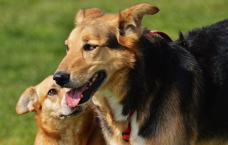 Seminar - Methoden der Hundeerziehung